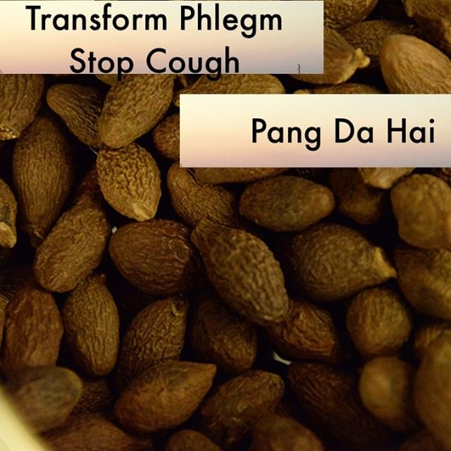 I overuse Pang Da Hai. But it is one of my favorite ways to introduce patients to raw herbs. If someone has a cough and a sore throat or they have constipation I have them pop one of these seeds in a french press and watch it bloom. They love the process of watching it open up and are pleasantly surprised at the smooth silky taste that eases their throat.    If you know someone who would like our channel please forward our posts to them!  #theduchannel #herbalmedicine #acupuncture #eastasianmedicinestudent #eastasianmedicine #acupuncturestudent #herbalist #herbs #witch #naturalmedicine #herbalism #tcm