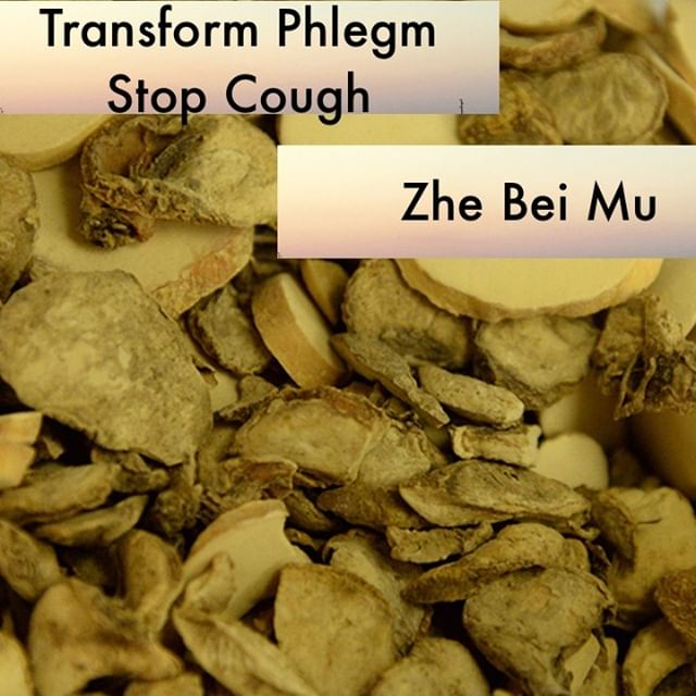 Zhe Bei Mu clears and transforms lung phlegm heat. Because of this it gets used for toxic swellings and phlegm clumping in the chest. It is paired frequently with lian qiao, xuan shen, hai piao xiao, jin yin hua, and yi yi ren.  If you know someone who would like our channel please forward our posts to them!  #theduchannel #herbalmedicine #acupuncture #eastasianmedicinestudent #eastasianmedicine #acupuncturestudent #herbalist #herbs #witch #naturalmedicine #herbalism #tcm