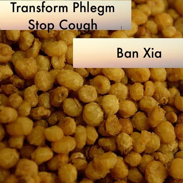 We use Zhi Ban Xia so frequently. In looking for what I want to say about this herb I found this from Zhang Shan-Lei in the Materia Medica ' The best aspects of ban xia can be summed up in four characters, opening (開), disseminating (宣), Slippery ( 滑), and downward directing( 降). The reason that it can eliminate turbidity and phlegm is simply its action in opening, draining, and slipping downward. '   If you know someone who would like our channel please forward our posts to them!  #theduchannel #herbalmedicine #acupuncture #eastasianmedicinestudent #eastasianmedicine #acupuncturestudent #herbalist #herbs #witch #naturalmedicine #herbalism #tcm