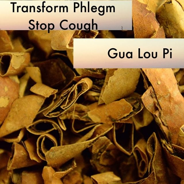 Gua Lou Pi when when peeled away from the whole gua lou mobilizes qi so that it may unbind the chest. It is mild in action and thus is safe to use in higher dosages. It facilitates the normal functional qi in its ability circulate in the body and thus stops cough and transforms phlegm as its category suggests.  If you know someone who would like our channel please forward our posts to them!  #theduchannel #herbalmedicine #acupuncture #eastasianmedicinestudent #eastasianmedicine #acupuncturestudent #herbalist #herbs #witch #naturalmedicine #herbalism #tcm