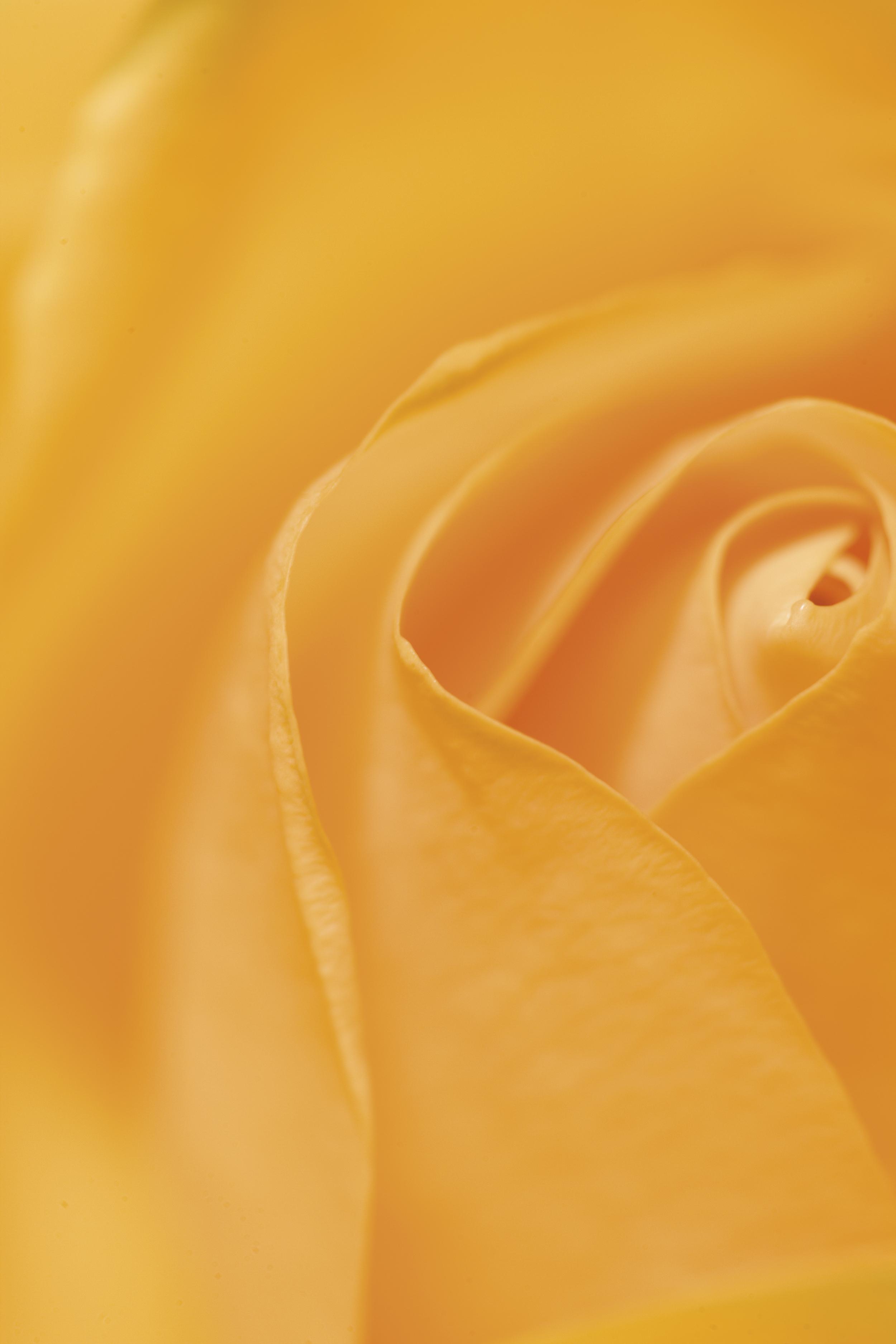 Flowers.8625.jpg