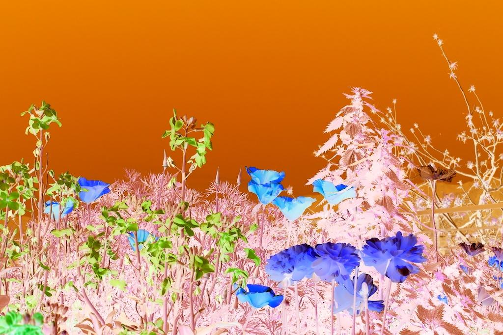 Orange Sky Garden