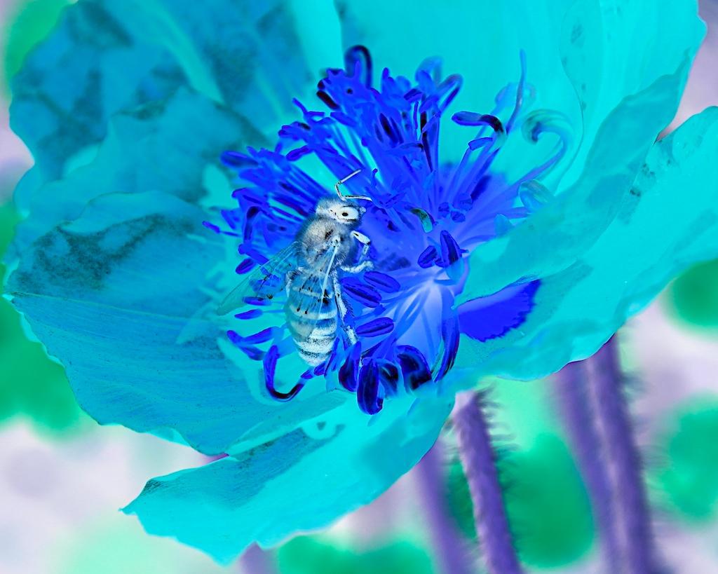 Honey Bee One