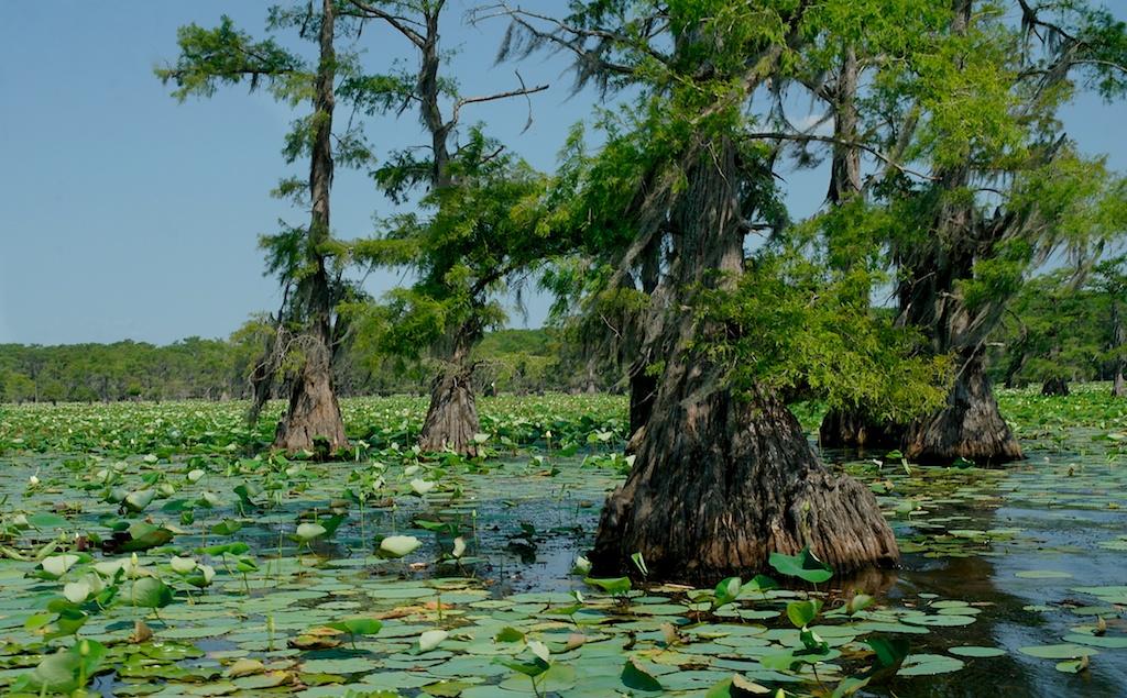 Caddo_Lake_2011-06-19_01-50-32__SAM5656©MaggieLynch2011.jpg