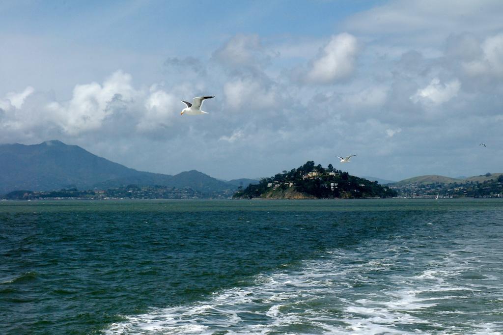 Alcatraz 385.jpg