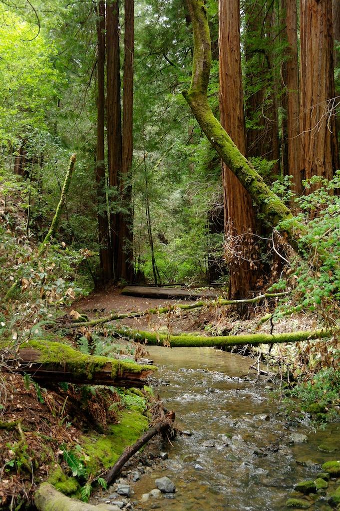 Muir Woods_2012-04-11_14-39-12_36 of 52©MaggieLynch2011.jpg