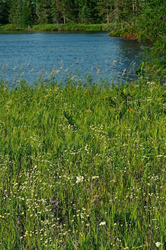 Lakeside_2011-07-08_04-18-55__SAM6892©MaggieLynch2011.jpg