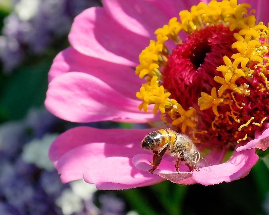 Eureka_2012-08-06_09-24-59_54©MaggieLynch2012.jpg