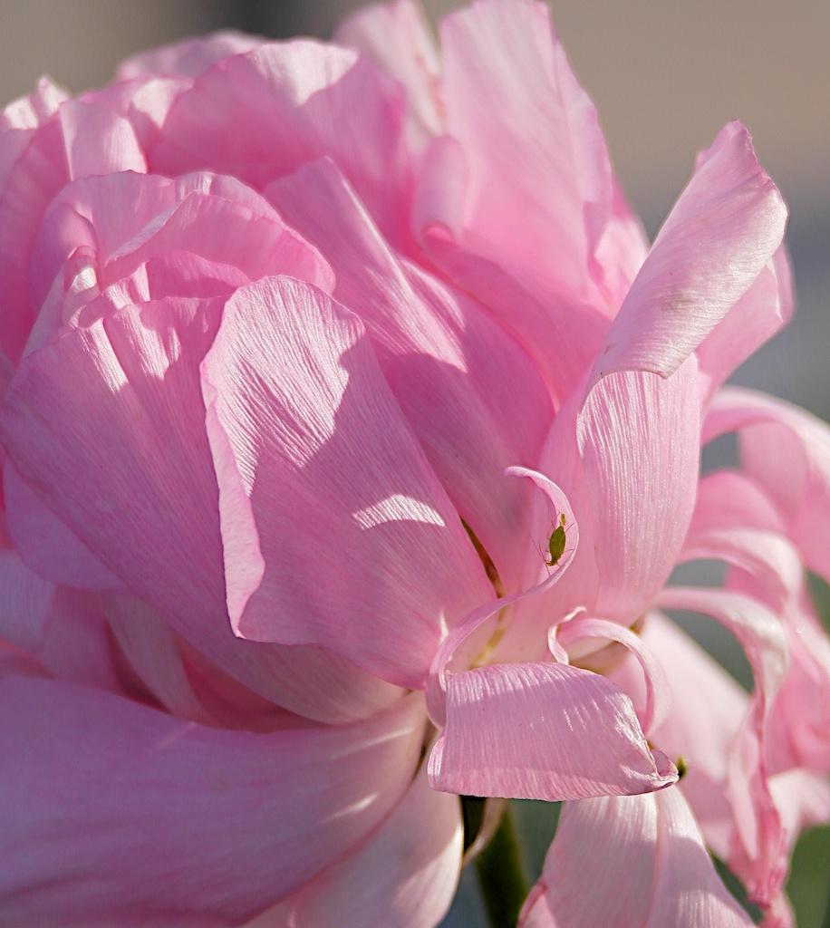 flower_2014-02-04_20-05-44_9 of 161©MaggieLynch2014 - Version 5.jpg