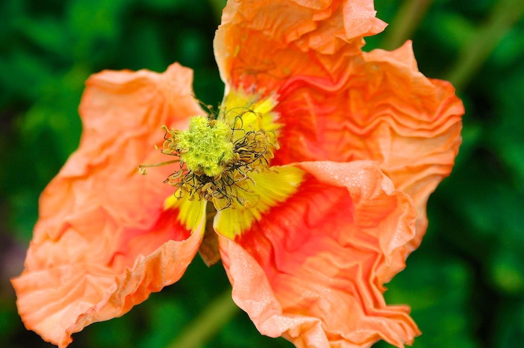 poppy_2013-03-19_08-53-23_4 of 34©MaggieLynch2011.jpg