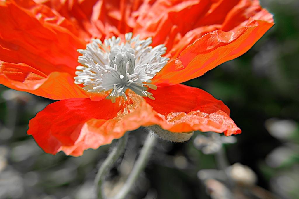 Poppy_2013-05-09_08-42-29_9 of 49©MaggieLynch2011.jpg