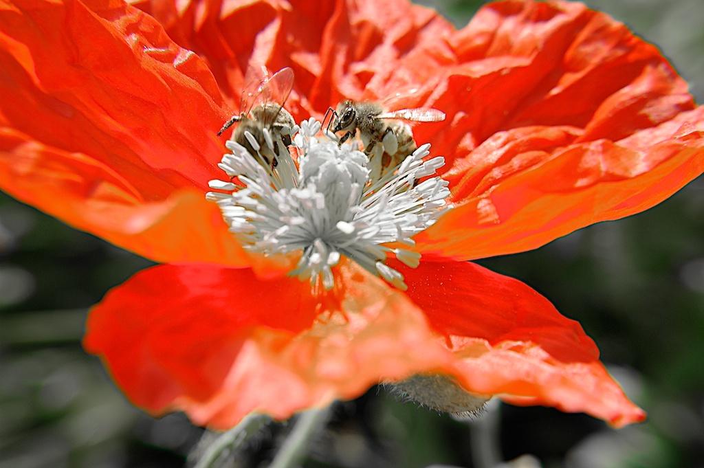 Poppy_2013-05-09_08-43-38_13 of 49©MaggieLynch2011.jpg
