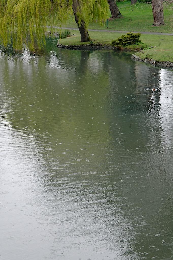 Beacon_Hill_Park_2011-05-02_00-58-56__SAM4522©MaggieLynch2011.jpg