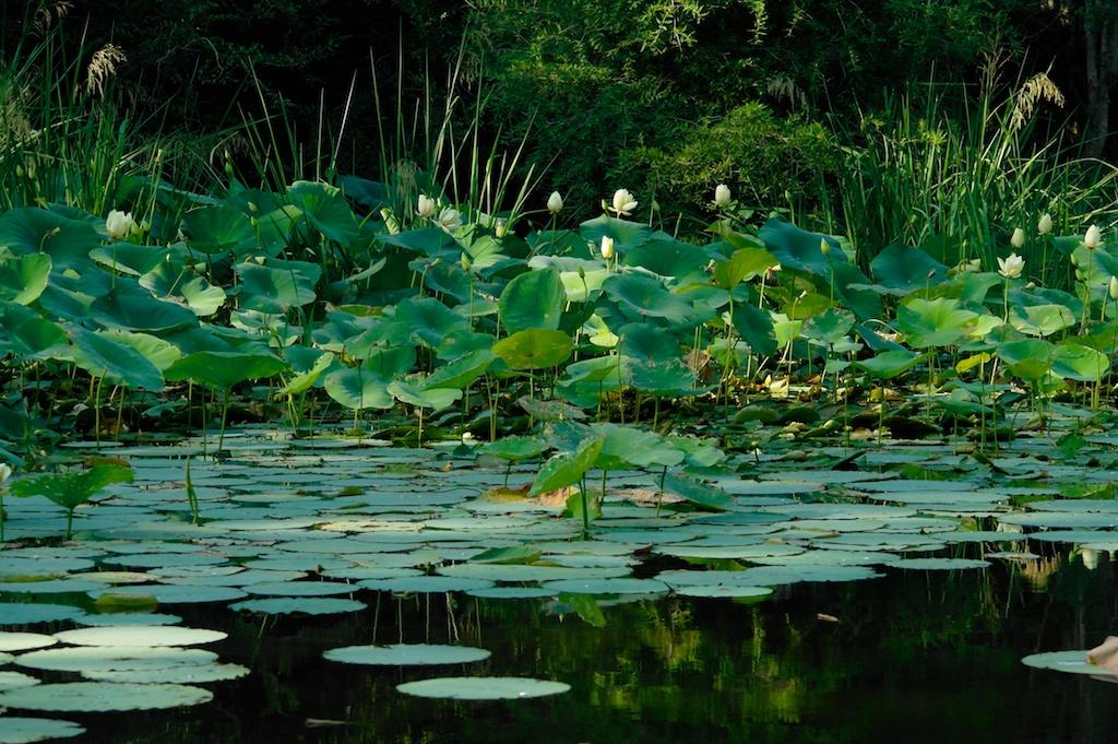 Caddo_Lake_1999-12-31_16-14-34_29©MaggieLynch2012.jpg