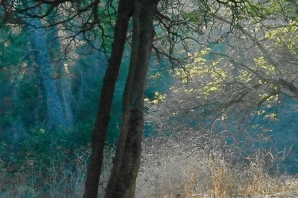 Fryman_Canyon_2012-11-07_16-19-12_2 of 20©MaggieLynch2011 - Version 6.jpg