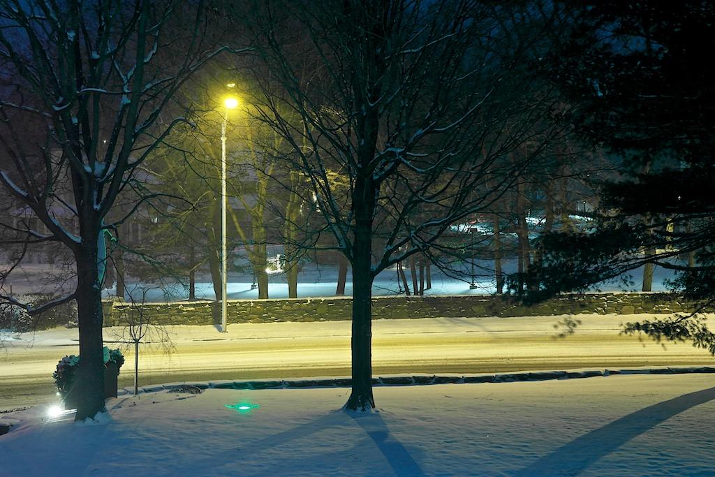 OG_in_snow_2013-12-15_01-59-39_6 of 9©MaggieLynch2013.jpg