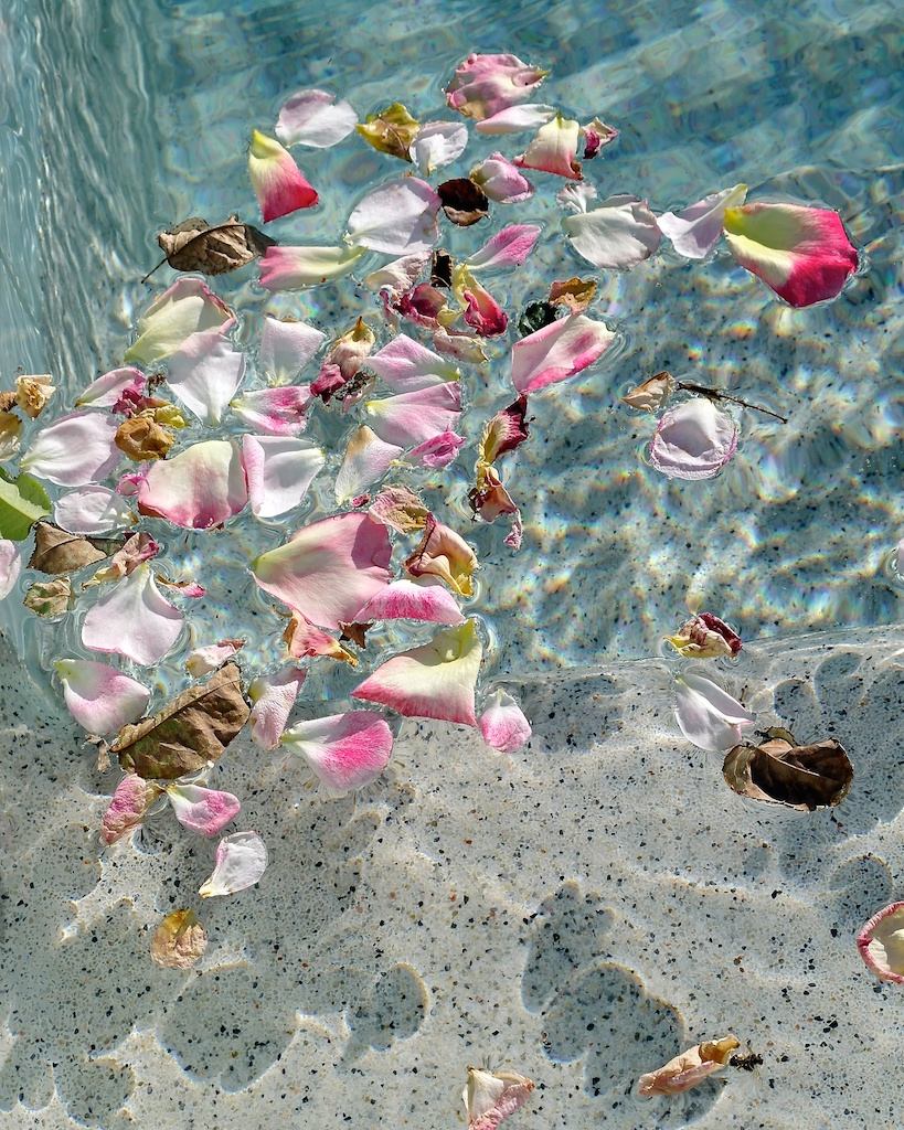 Petals in the pool_2012-06-05_07-46-37_4©MaggieLynch2012 - Version 18.jpg