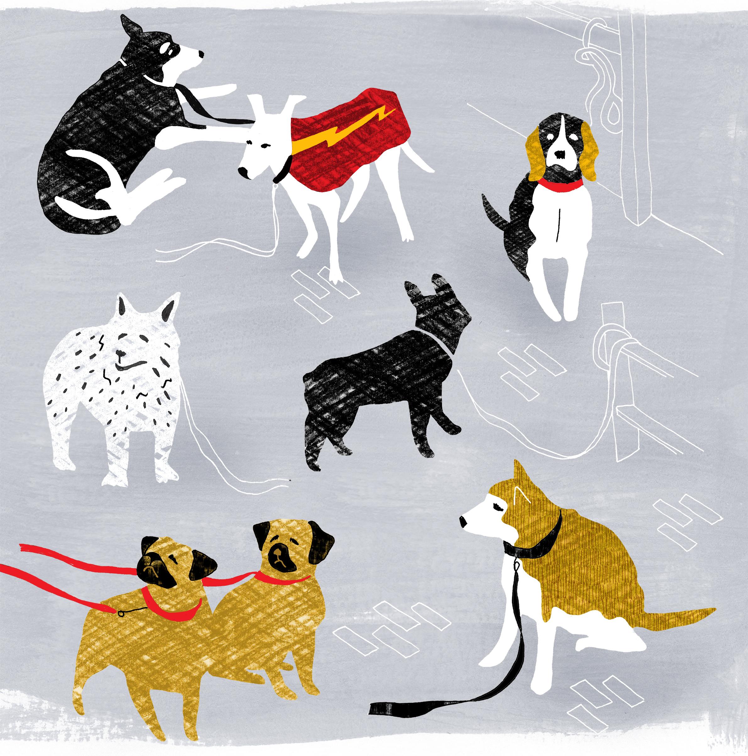 dogswaitinginstagram.jpg