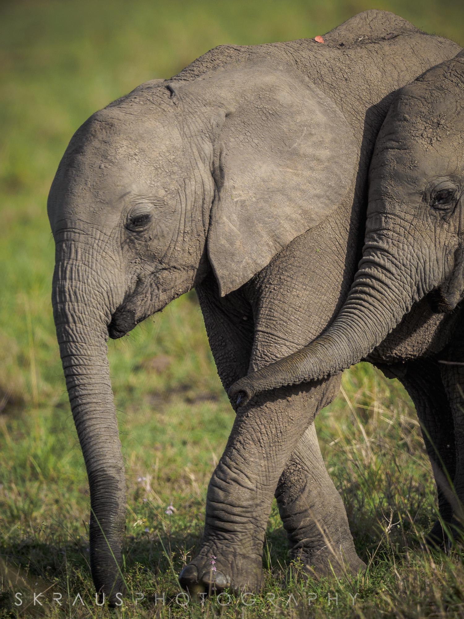 Elephant  Friends.jpg