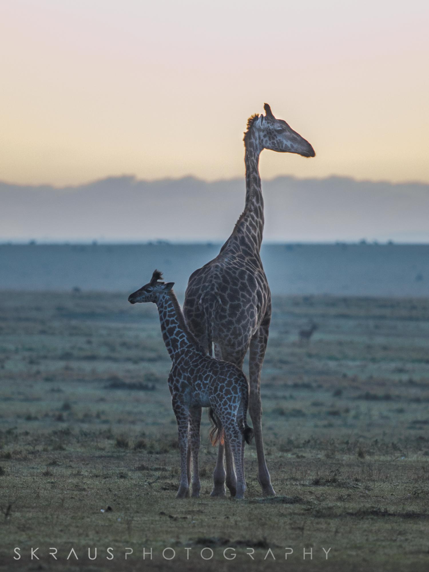 giraffe with baby.jpg