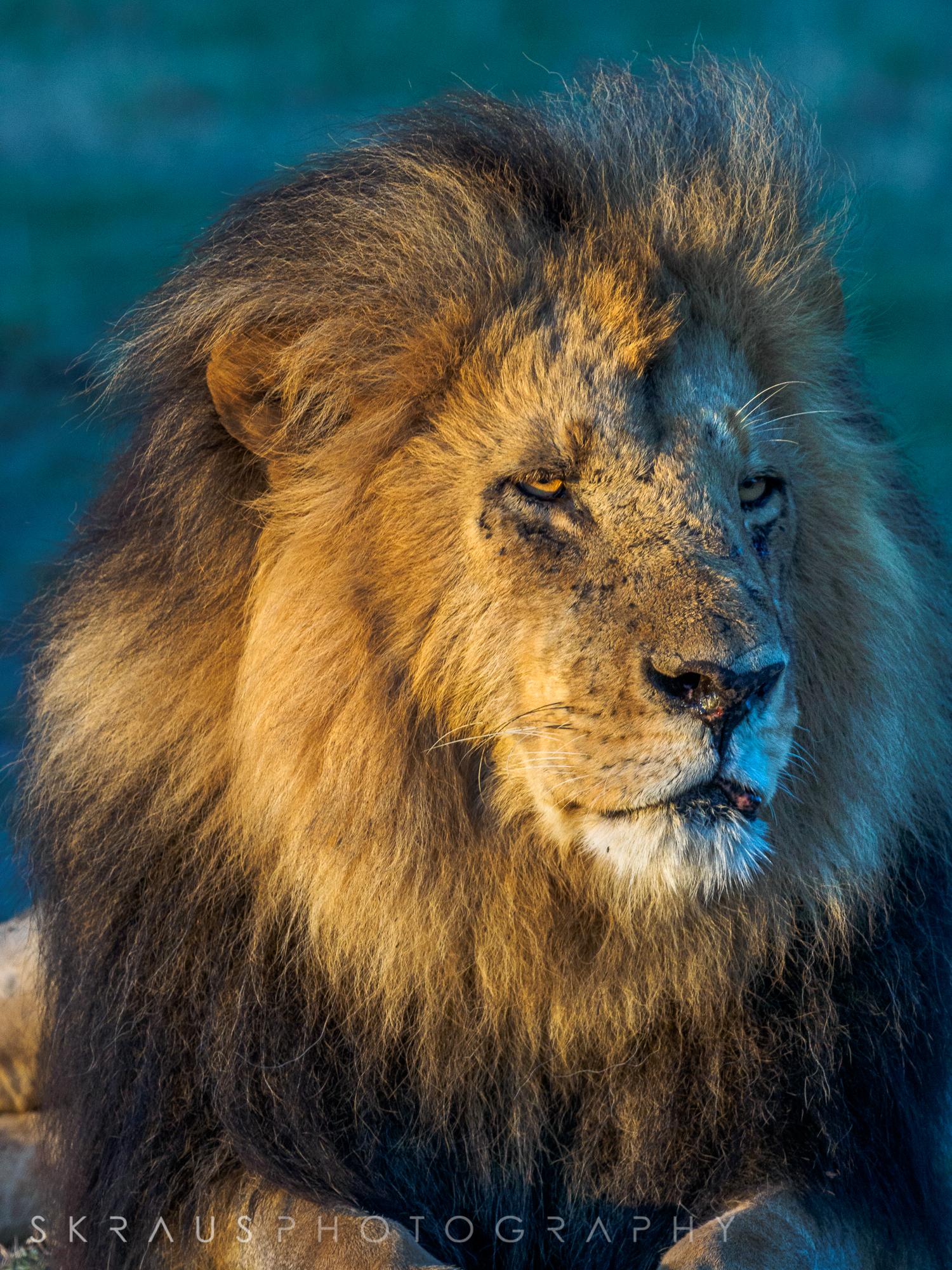 Lion Lipstick.jpg