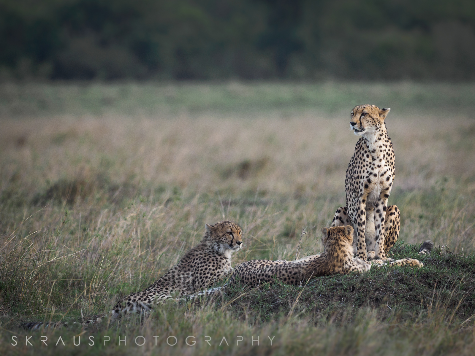 Cheetah Family.jpg