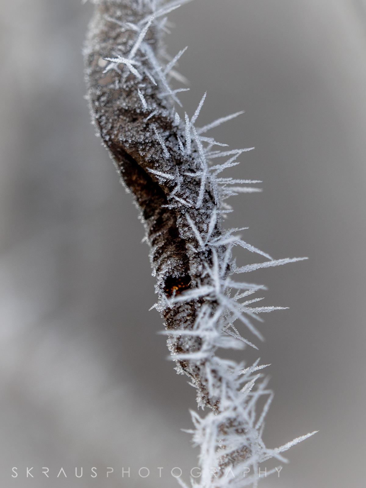 Frozen Fog-5.jpg