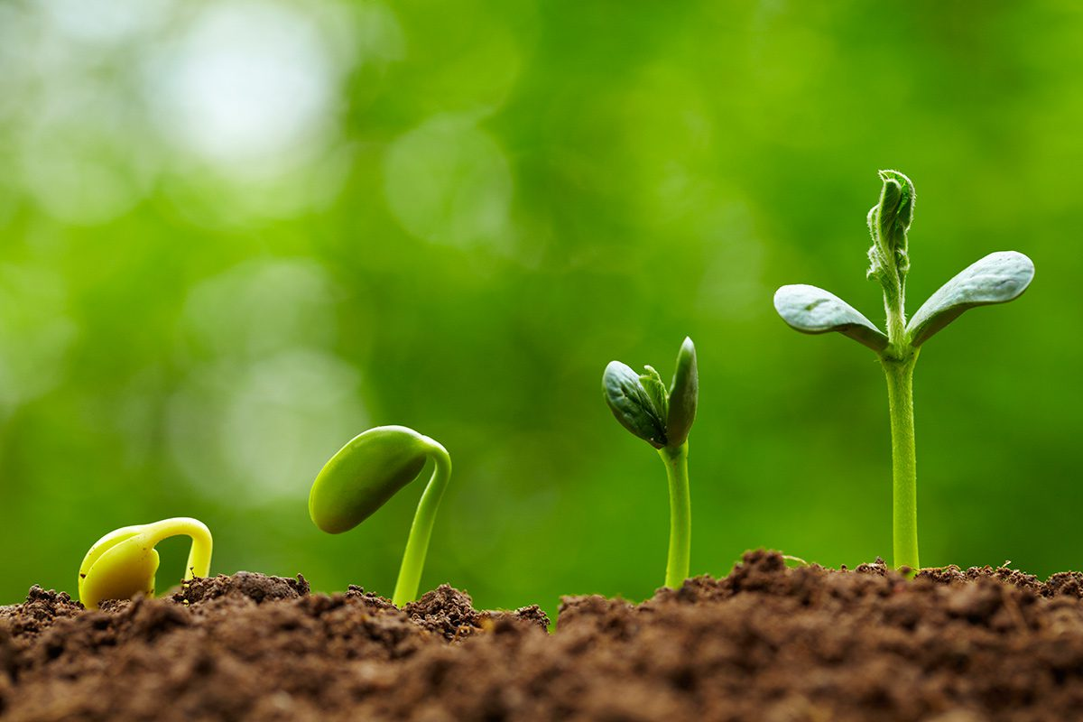 Walking with Jesus is like a seed growing. You don't stop.