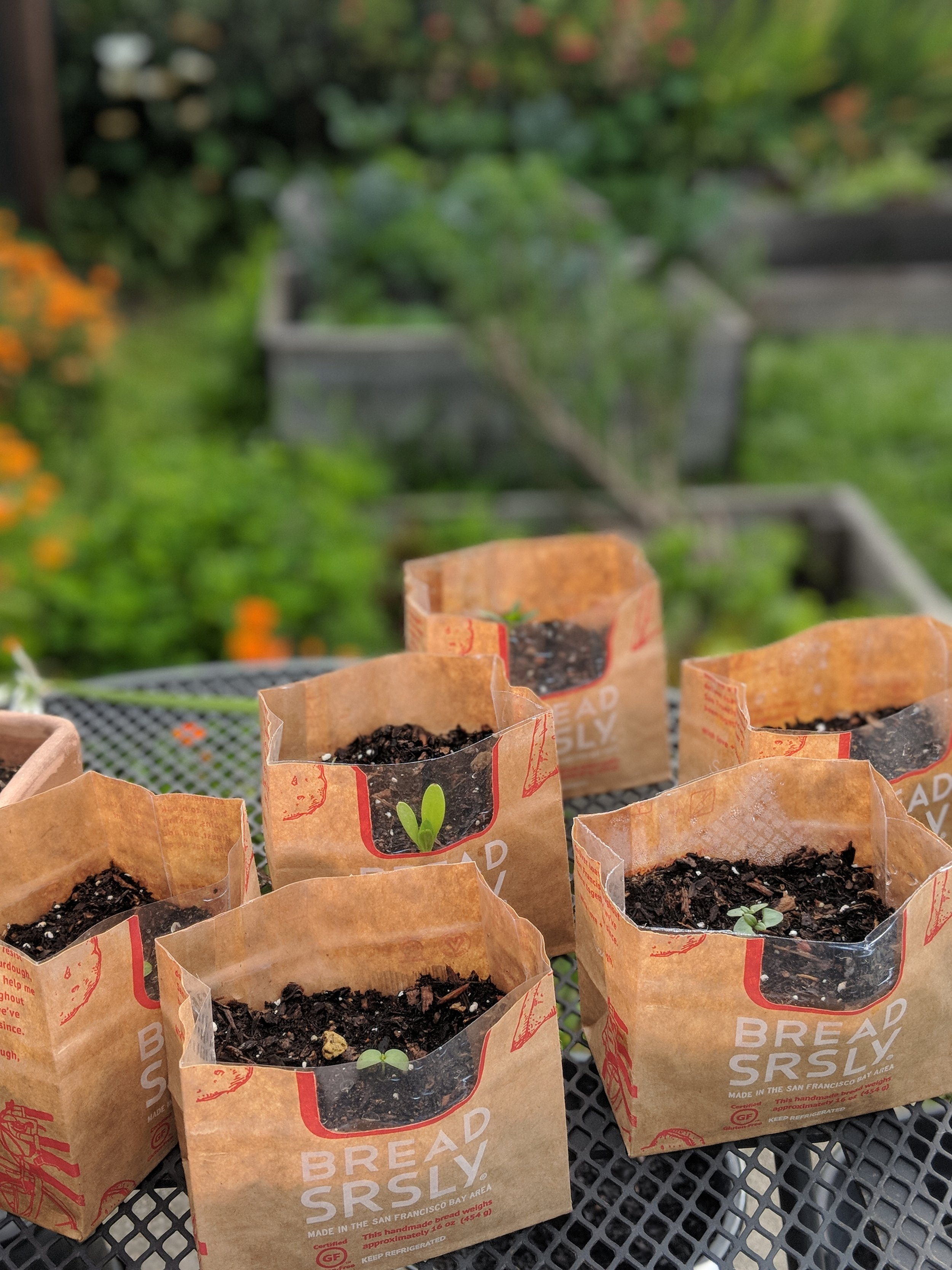 Bread-SRSLY-bags-used-as-planter-bags
