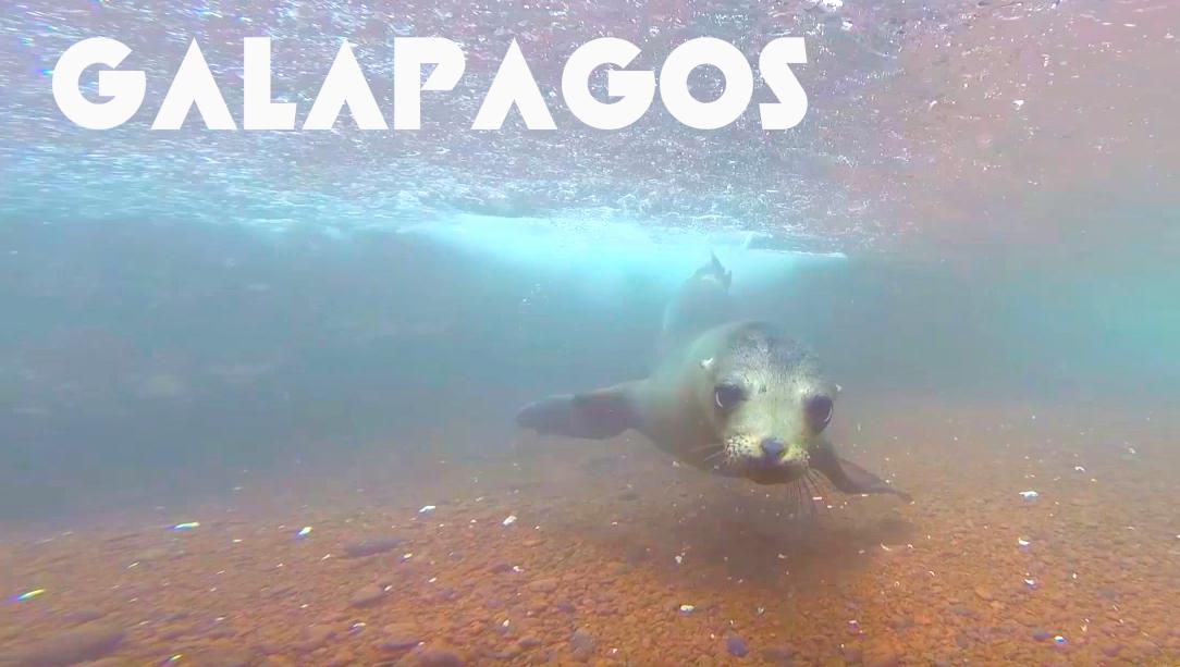 Galapagos Postcard Thumbnail.jpg