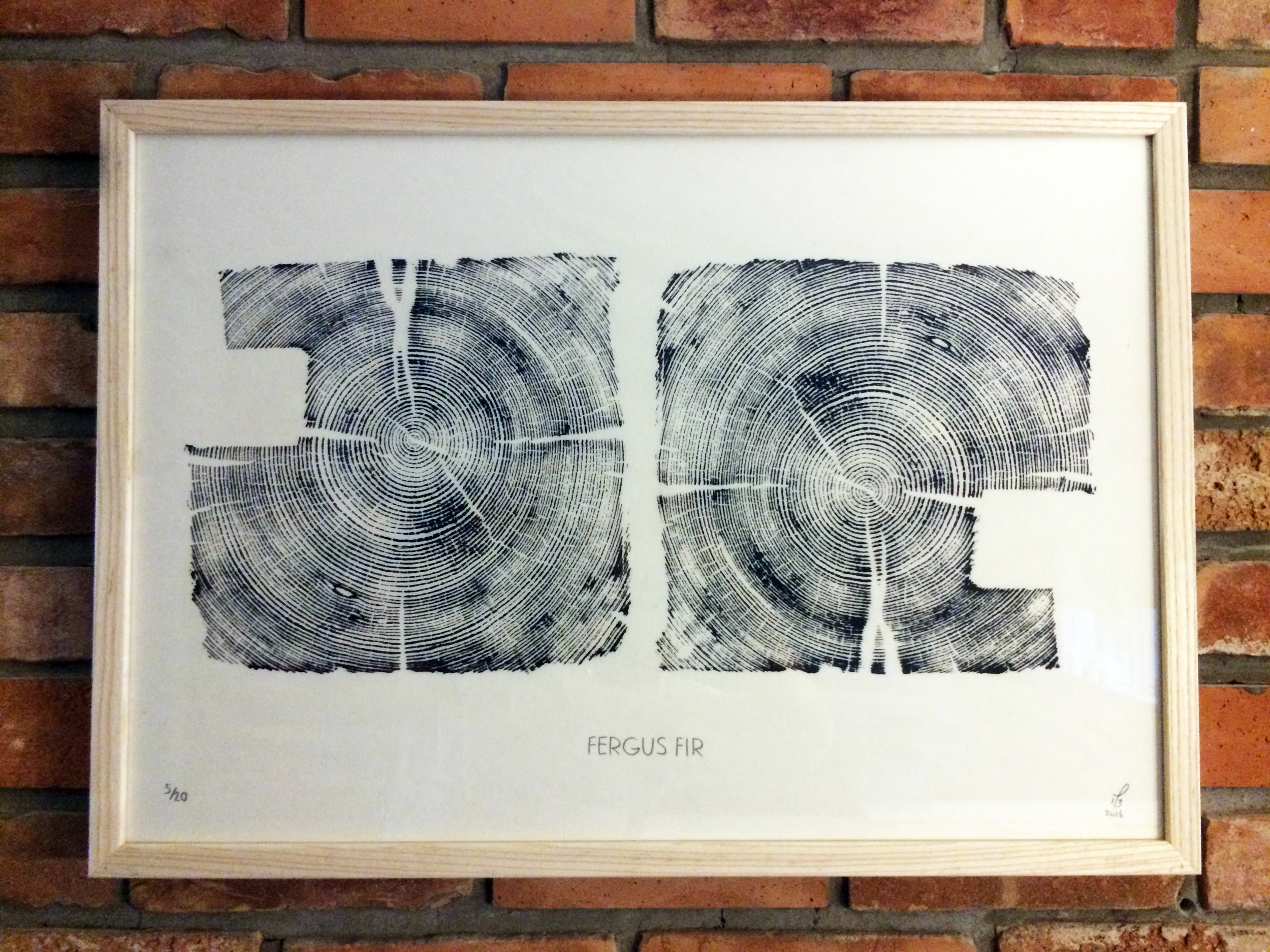 Fergus Fir  26x18in (10x10 print); Limited Edition /20 Printed on Japanese Okawara paper. This is a cross section relief of a Douglas Fir cross beam from a barn I took down north of Fergus, Ontario.   SOLD OUT!