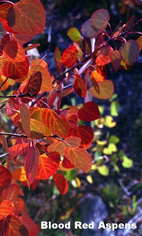 autumncolors.jpg