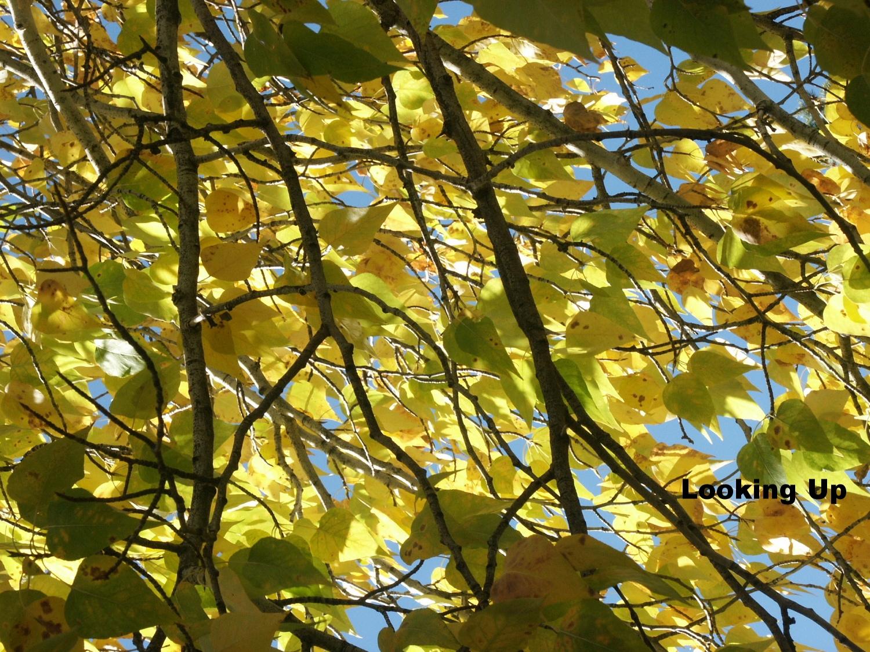 cottonwood (2).JPG