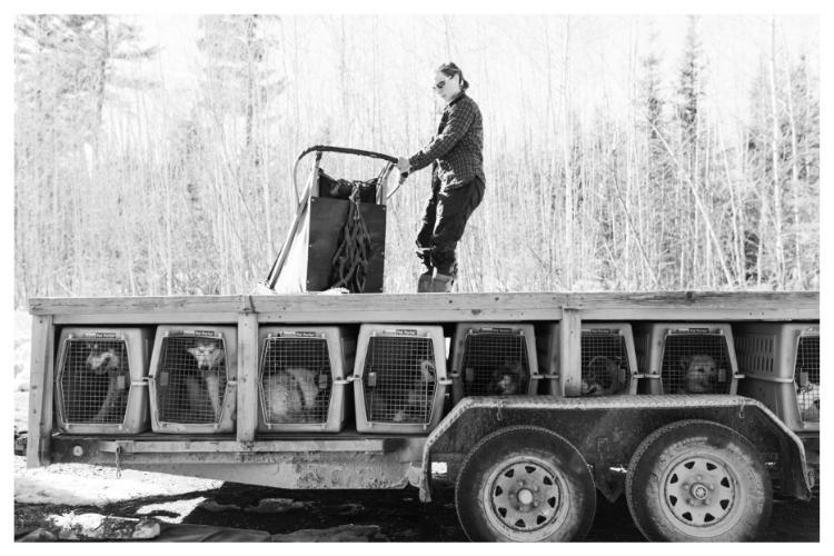dogsledding trailer
