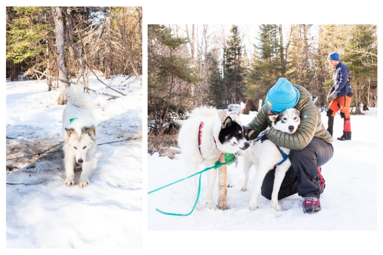 getting ready to dog sled