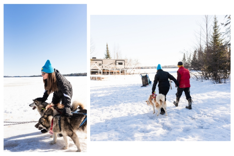 ely minnesota dogsledding