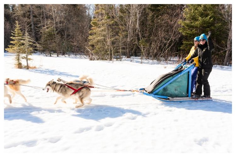 taking off dogsledding