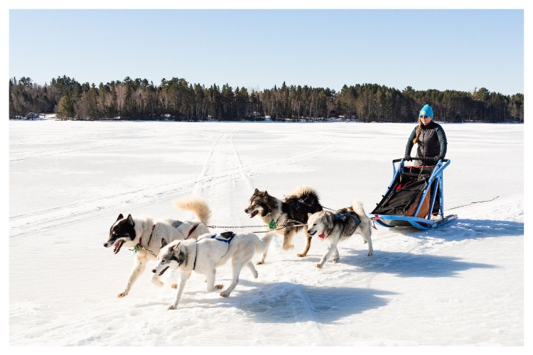sled dogs and musher across frozen lake