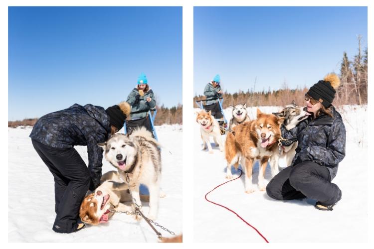 sled dog snuggles