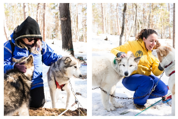 loving on the sled dogs