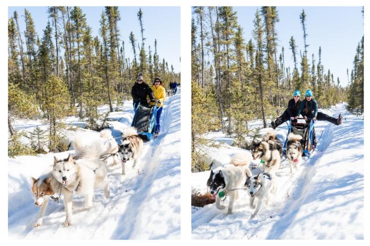 action shot of dogsledding
