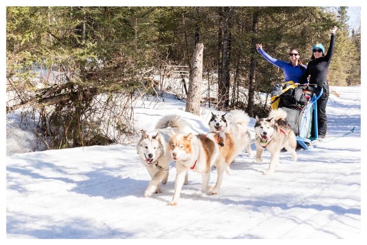 dog sledding excitement