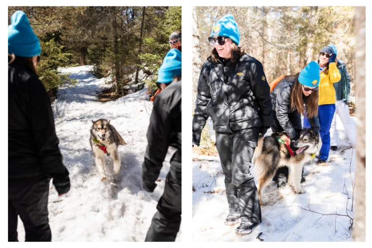 excited sled dog mobs the group