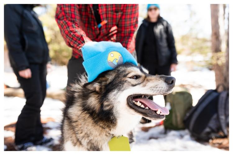 adventurher sled dog mascot