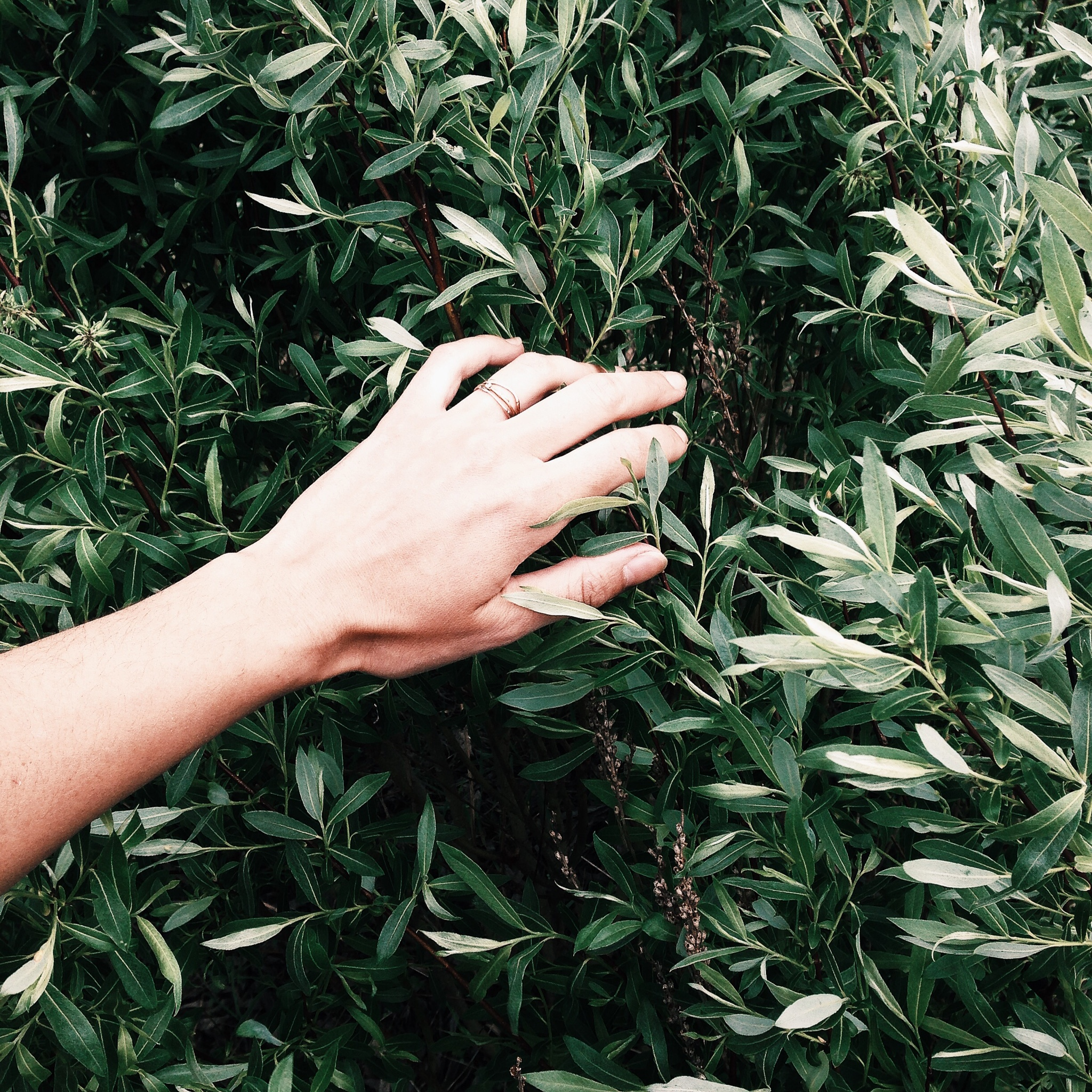 be like the willow:hand of a maker.jpg
