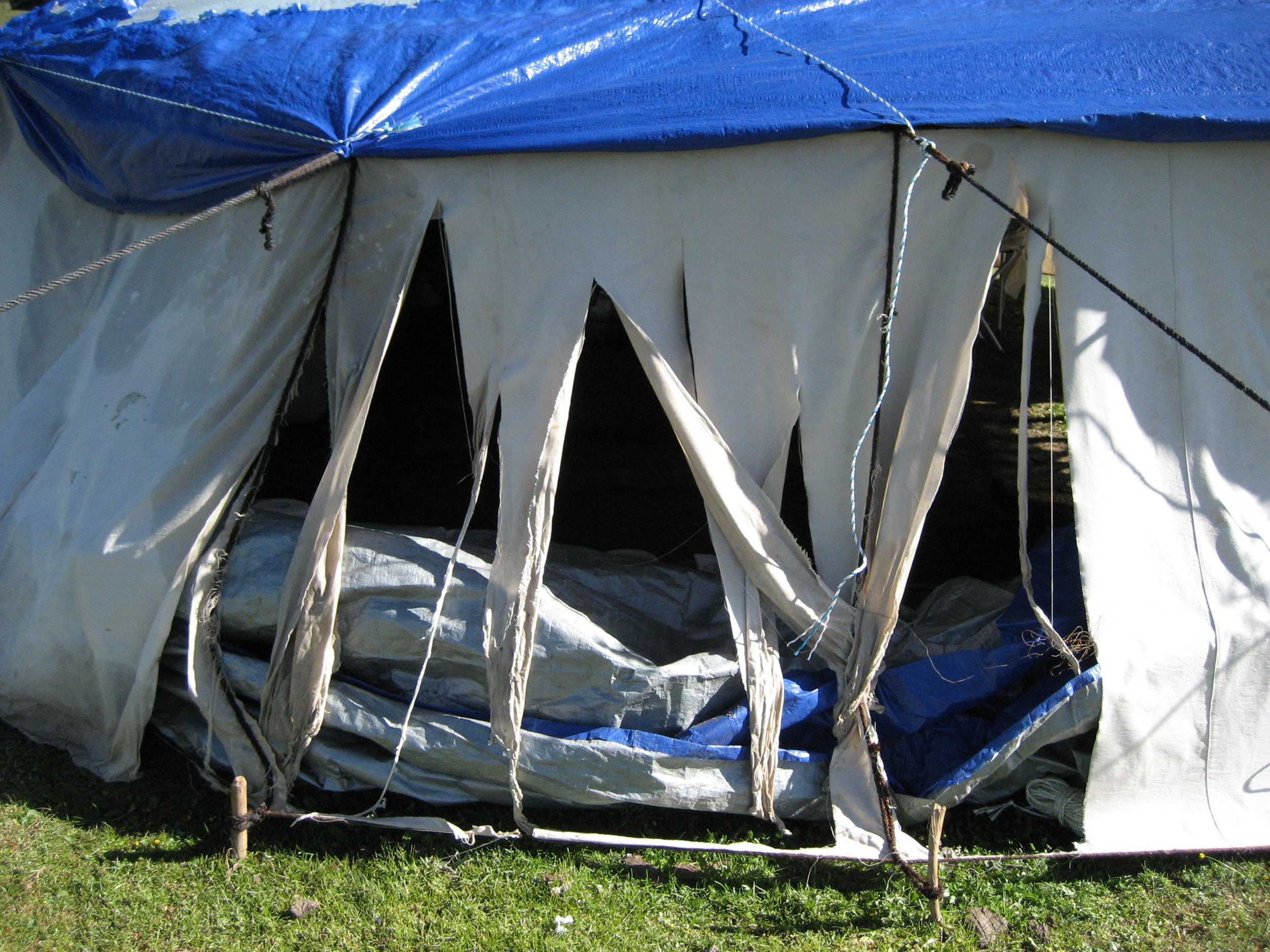 Yak tries to break into our tent