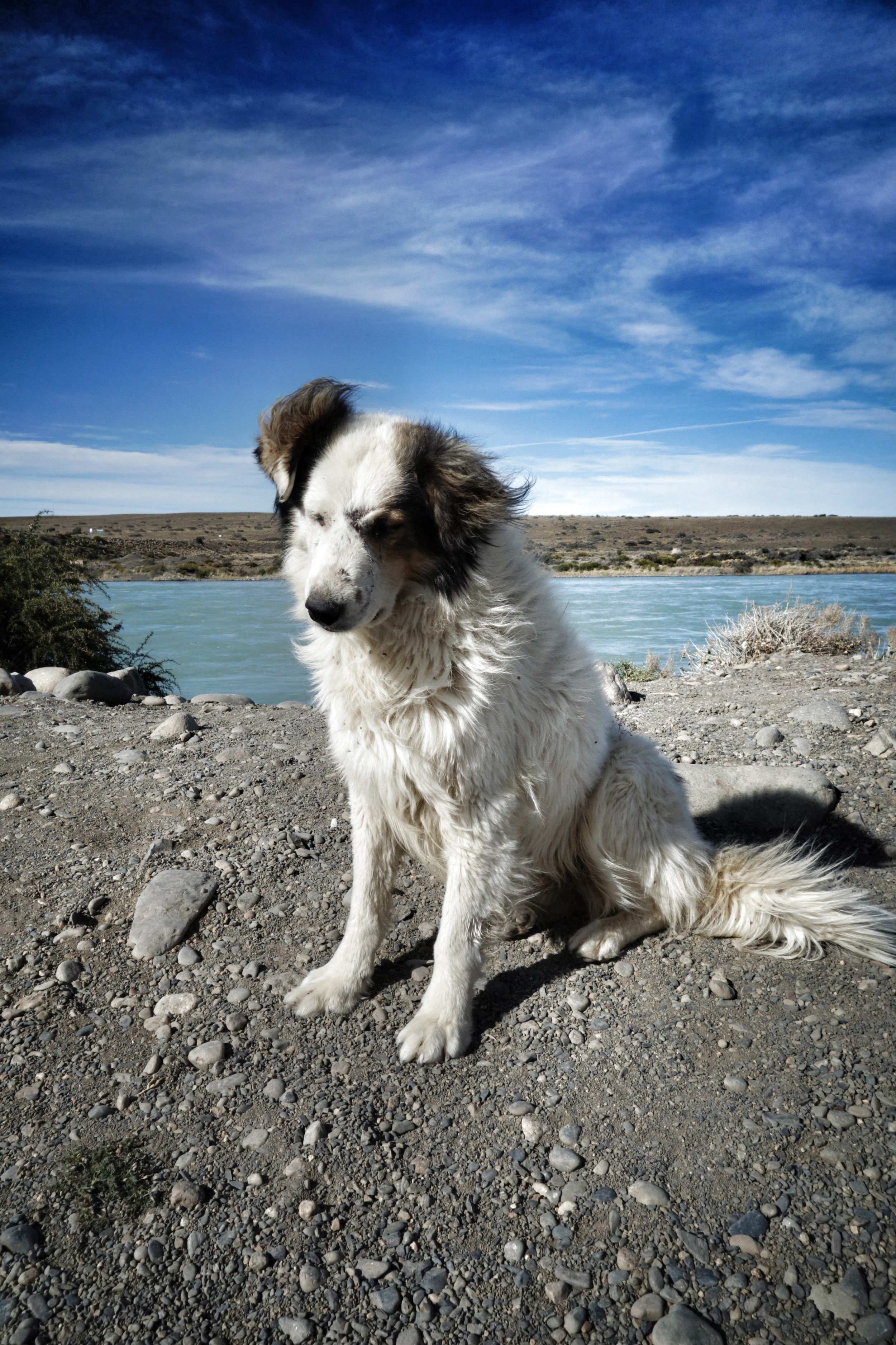 Dogs of Patagonia