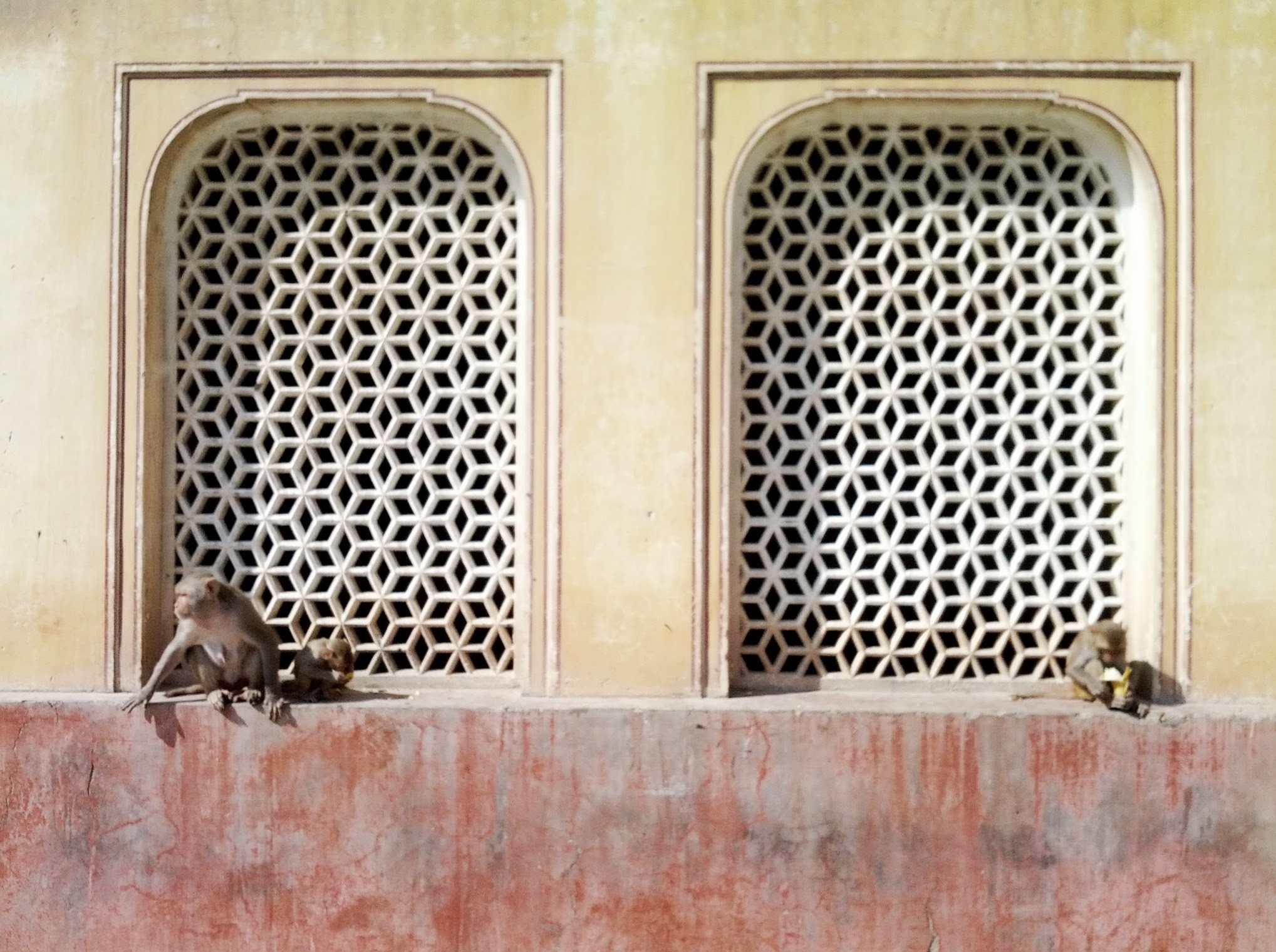 Galwar Bagh (Monkey Temple), Jaipur