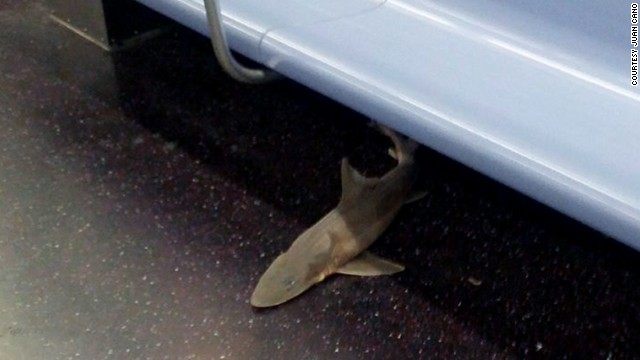 130807204351-subway-shark-story-top.jpg