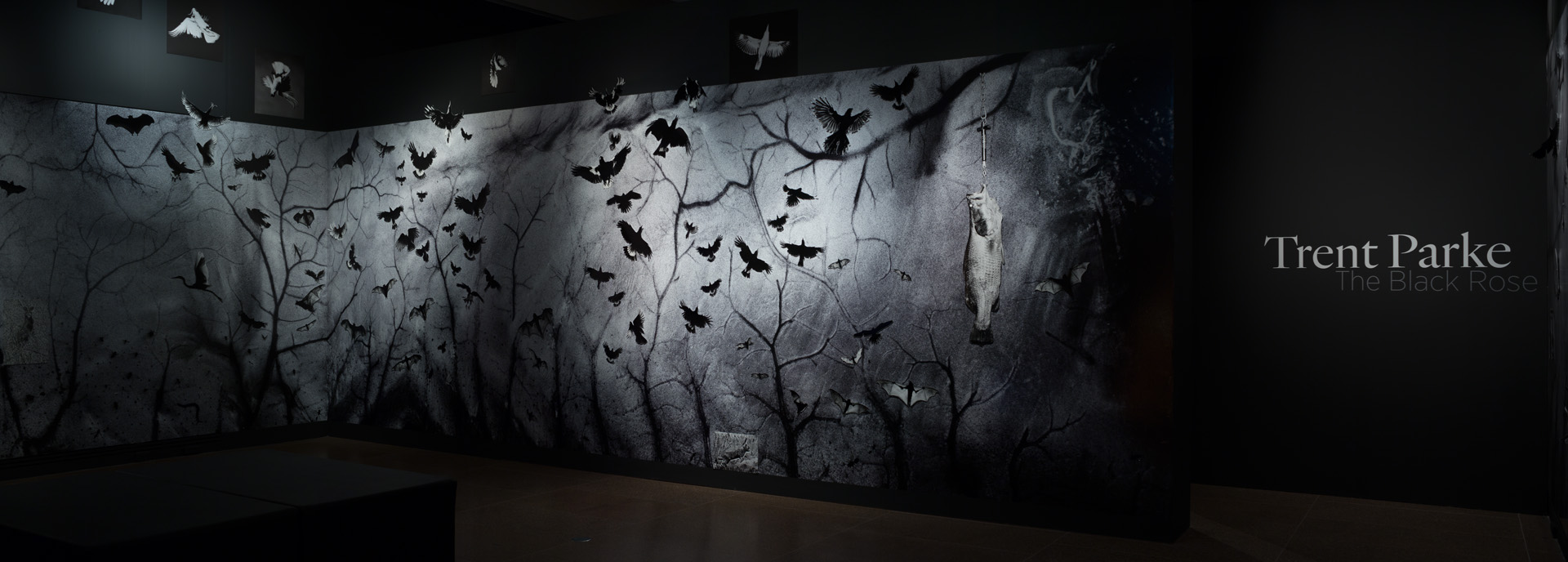 trent parke the black rose agsa art gallery of south australia install documentation photography adelaide commercial advertising sam roberts photography photographer